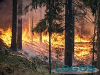 Attualità - Incendio boschivo (Foto internet)
