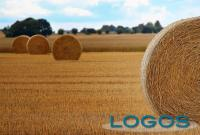 Ambiente - Campo agricolo (Foto internet)
