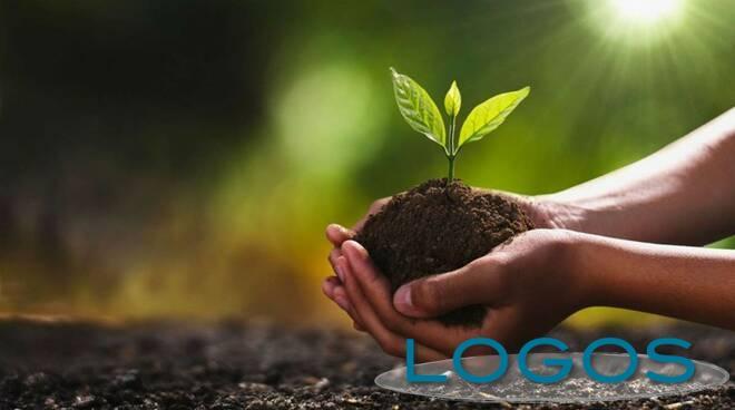 Ambiente - Piantumazione (Foto internet)