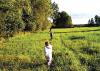 Rubrica  'Trucioli di Storia' - A caccia di api