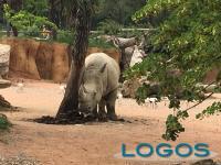 Eventi - Rinoceronte a 'Le Cornelle'