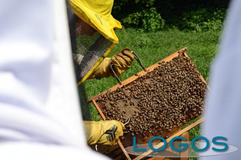 Territorio - Parco apiario (Foto internet)