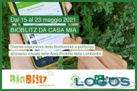 Ambiente - 'BioBlitz'