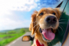 Attualità - In viaggio con il proprio animale