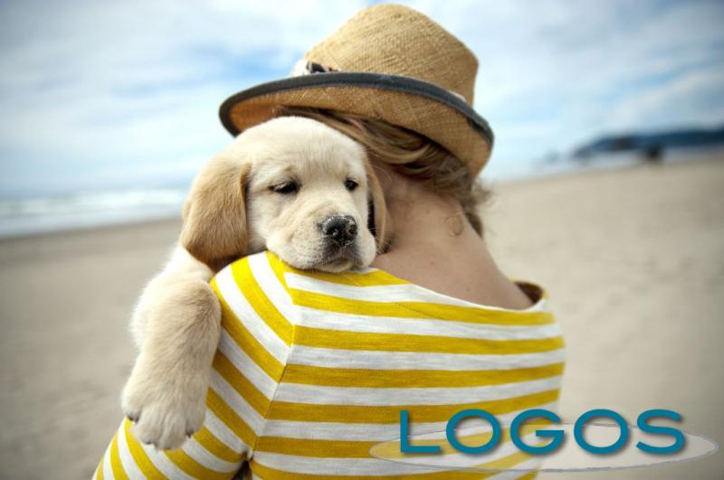Attualità - Vacanze con i propri animali (Foto internet)