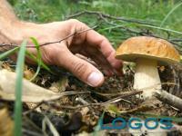 Generica - Raccolta funghi (foto internet)