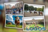 Territorio - Eventi in Lombardia