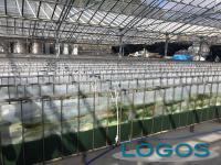 Inveruno - Produzione di microalghe in Liguria per Fratelli Parodi