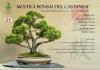 Castano / Eventi - Mostra bonsai