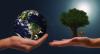 Ambiente - Sostenibilità (Foto internet)