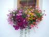 Cerano - Il 4° concorso 'Cerano fiorita'