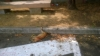 Castano Primo - Gatta trovata morta in vicolo Tortuoso