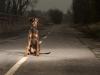 Attualità - Abbandono animali (Foto internet)
