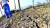 Attualit - Clima: danni a coltivazioni e allevamenti (Foto internet)